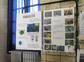 biodiv3.jpg